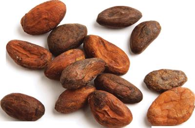 Cocoa Beans 1