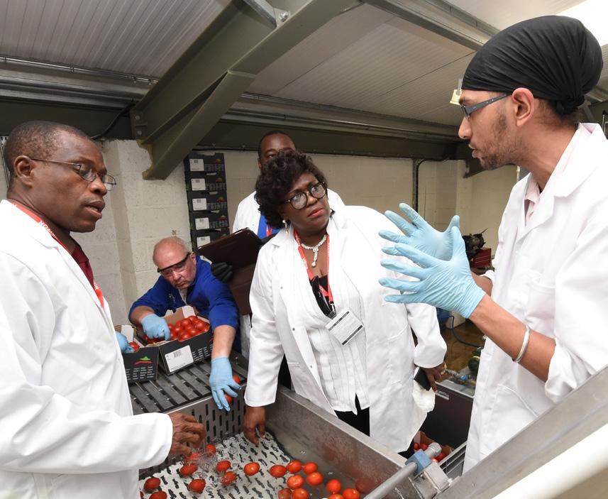 Alvan Blanch Tomato Paste Processing System Nigeria Page 1 Image 0003